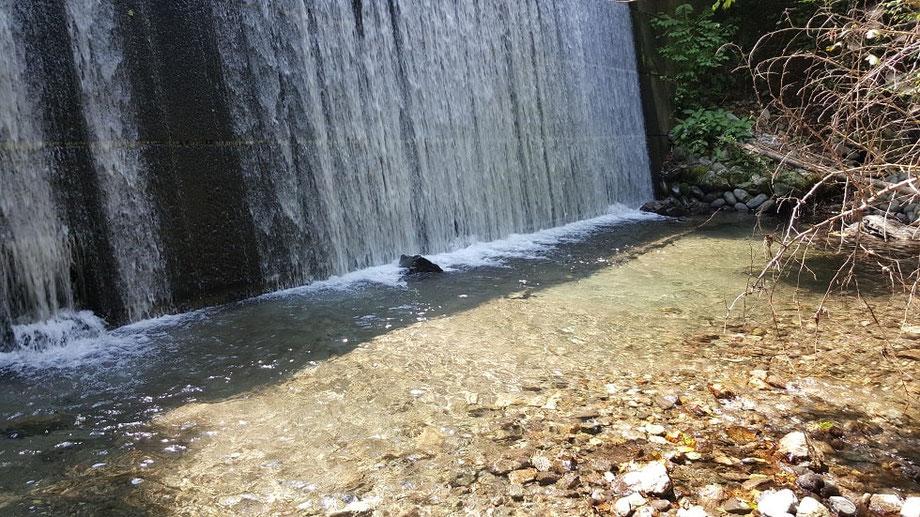 堰堤の下は魚が集まります。