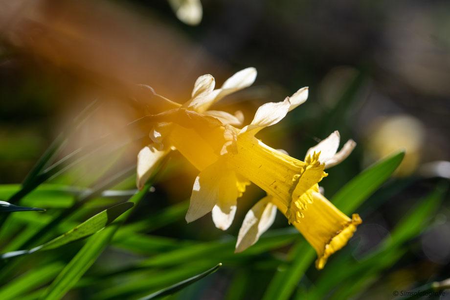 succulent andean cerro penitents
