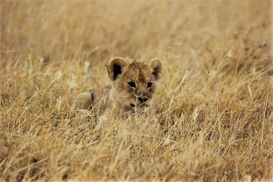 Serengeti Safari Adventure with Kilimanjaro Company