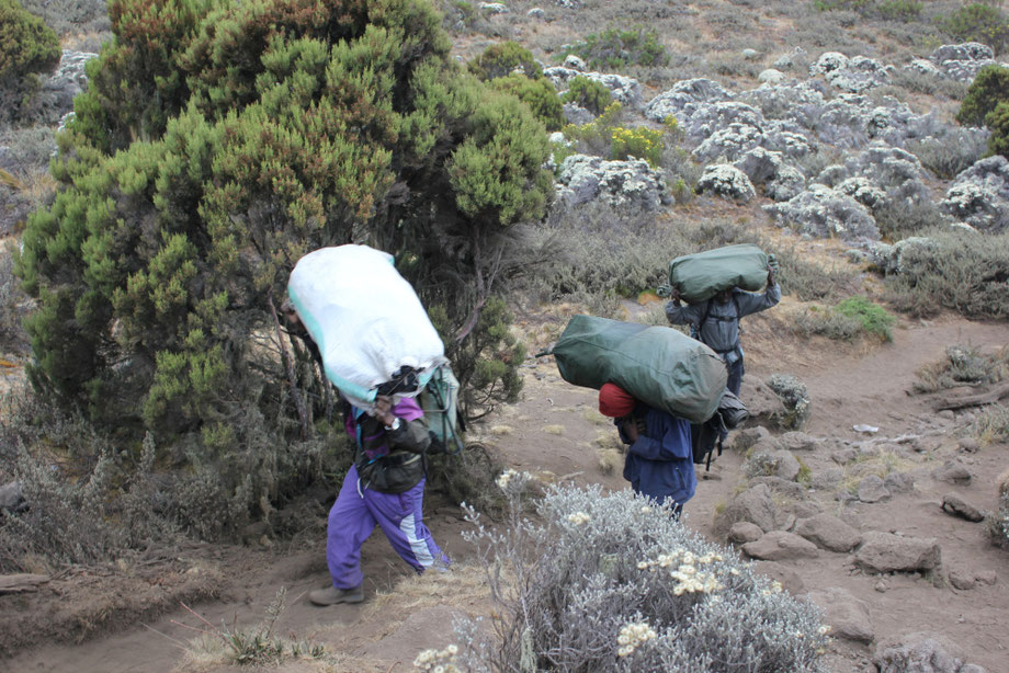 Kilimanjaro Company  - KPAP