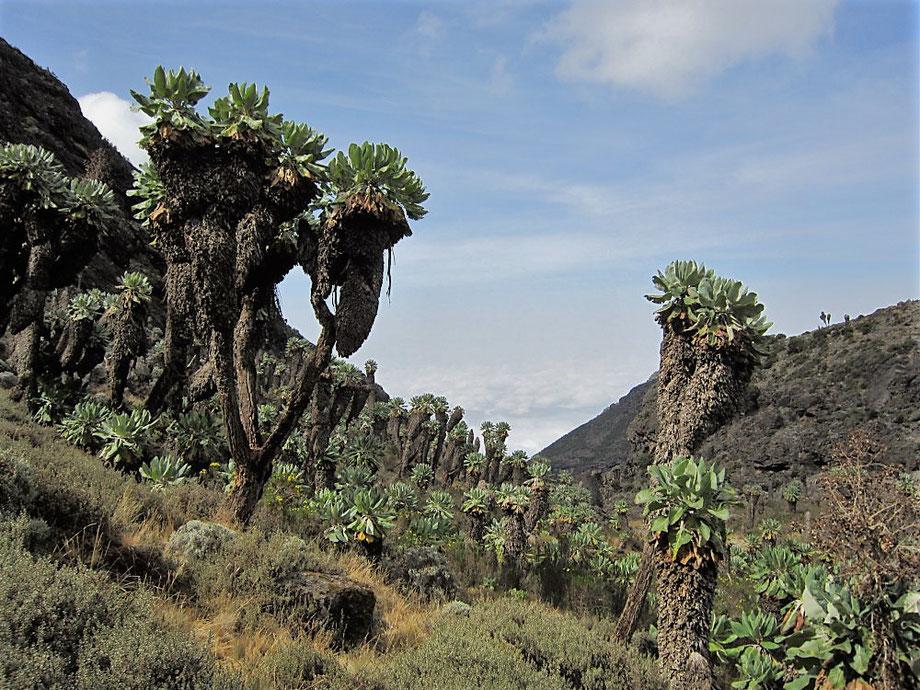 Barranco Canyon Mount Kilimanjaro