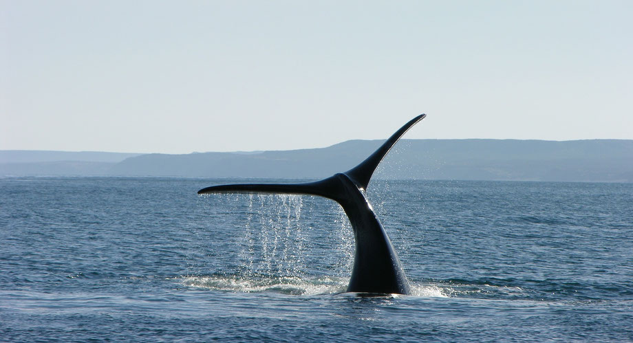 Hermanus whale tour
