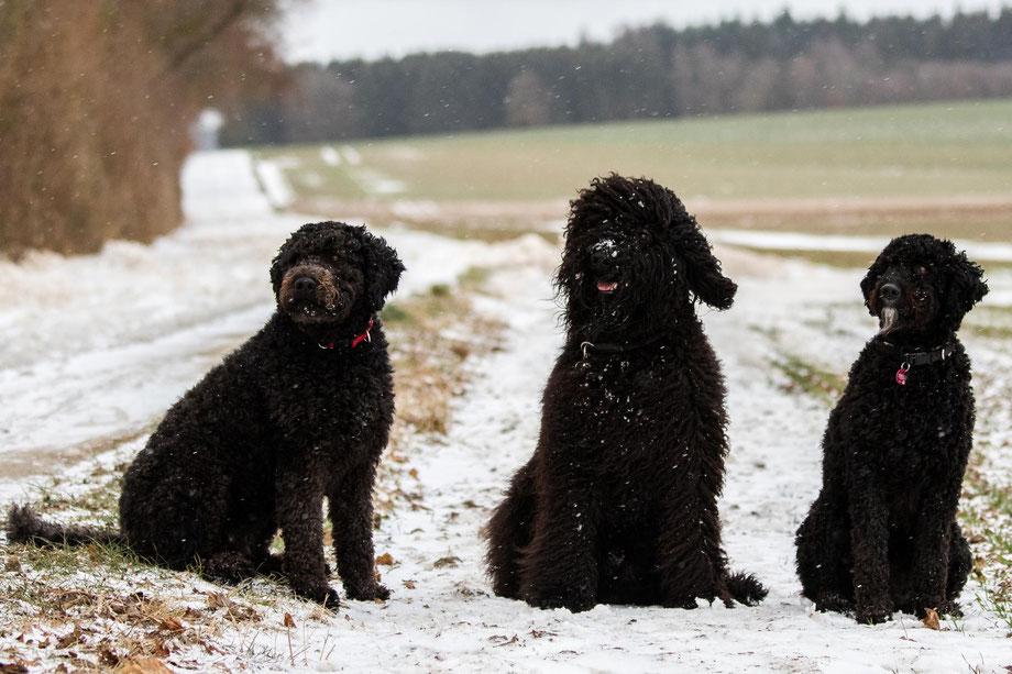 von links: Maya, Jacko und Holly