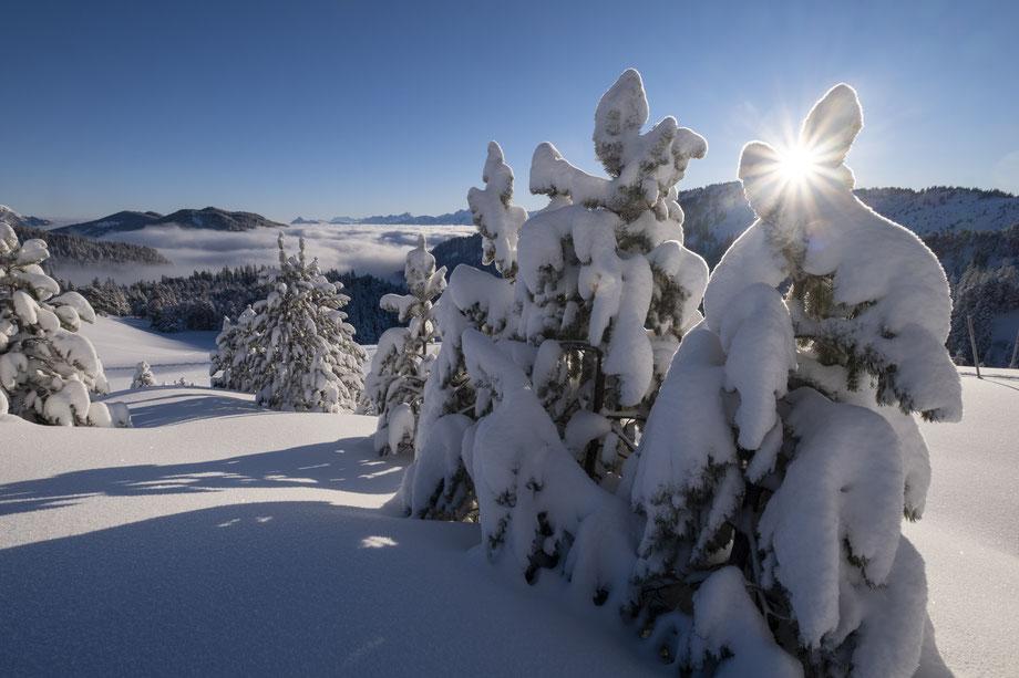 Tief verschneite Natur