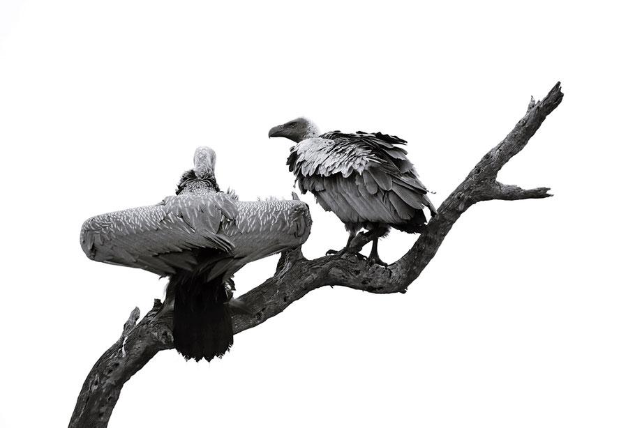 """majestic giraffe"""
