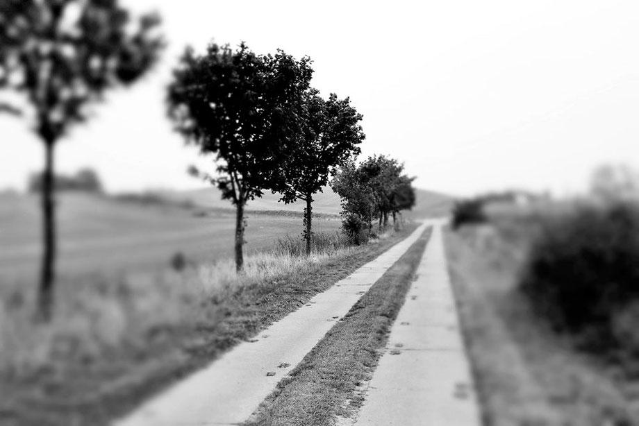 """""""field road"""""""