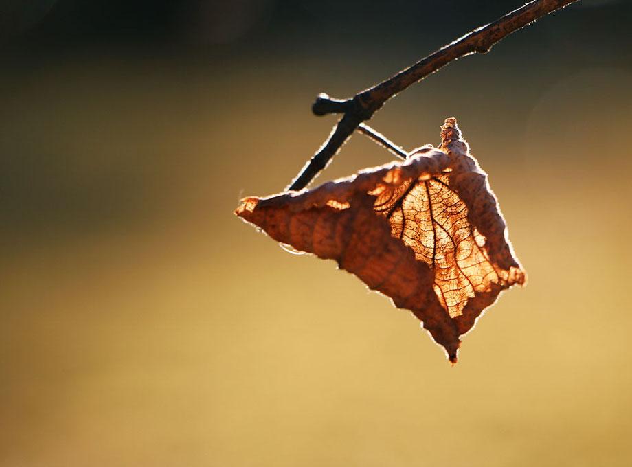 """autumn I"""
