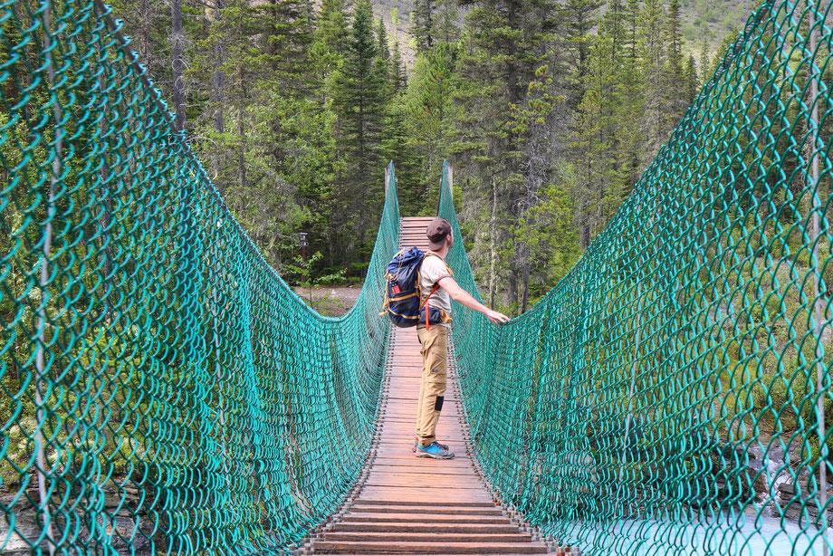 Whitehorn sur le Berg Lake Trail dans le Mount Robson Provincial Park (Colombie-Britannique - Canada)