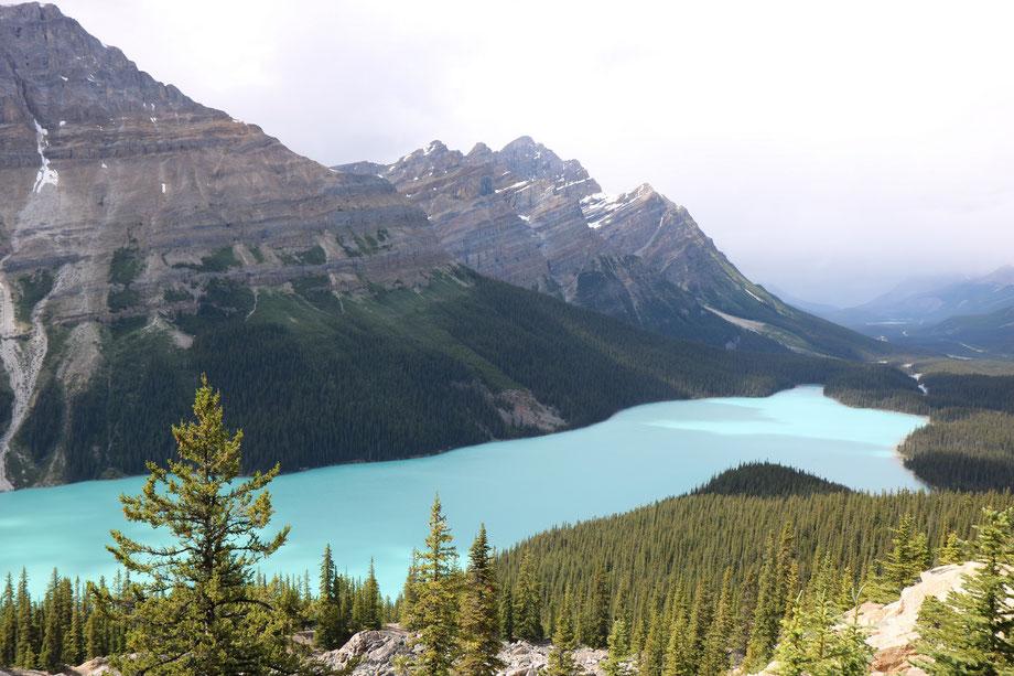 Peyto Lake sur la Icefields Parkway entre Jasper et Banff (Alberta - Canada)