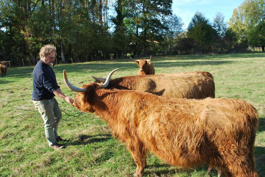 Papa et les vaches de la ferme bio de la Millanchère