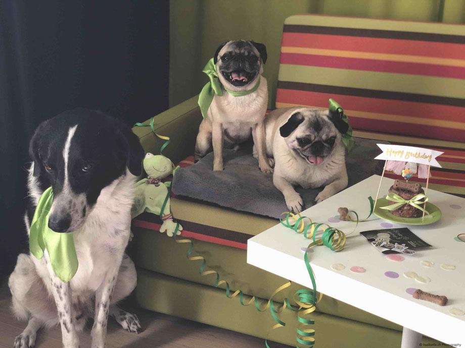 Dies nennt sich Gleichberechtigung & Aufmerksamkeit seitens Harrys Home ;): Den Seidenschal hat nicht nur Geburi-Mops erhalten, sondern wir - ich und meine 3 Babies - hatten an diesem Tag Partner-Look 💚 in Limettengrün!