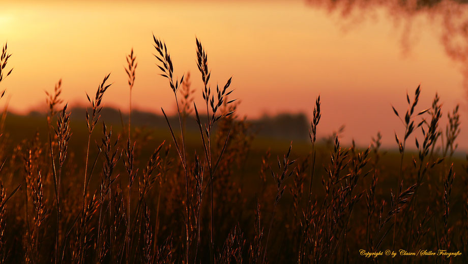 Duisburg Innenhafen, Clasen/Stiller Fotografie, Udo Clasen, Patrick Stiller, Nachtaufnahme, Langzeitbelichtung, Sonnenaufgang, Sonnenuntergang, rot, grün, blau, orange, gold, gelb, Pflanzen, Baum, Bäume, HDR, Düsseldorf, Duisburg, Natur, Tiere, Wolken,