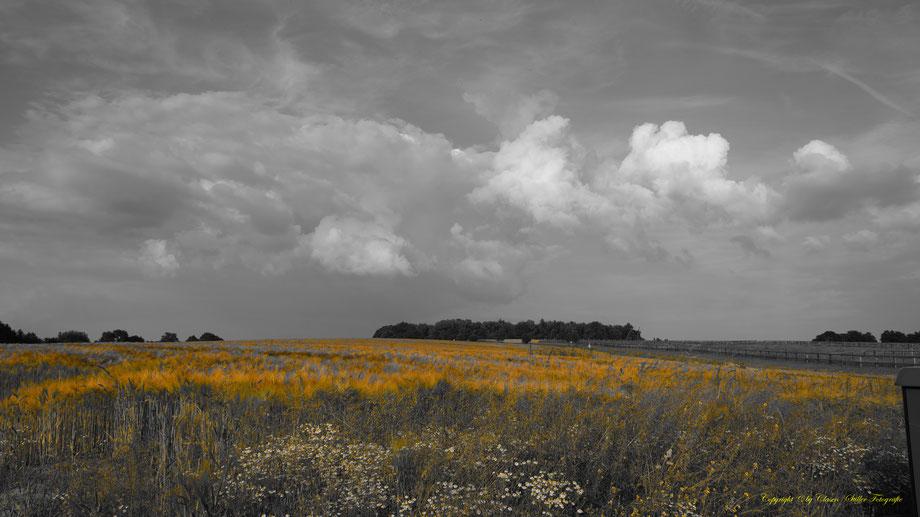 Landschaften, Felder, Wald, Wolken, Pflanzen,
