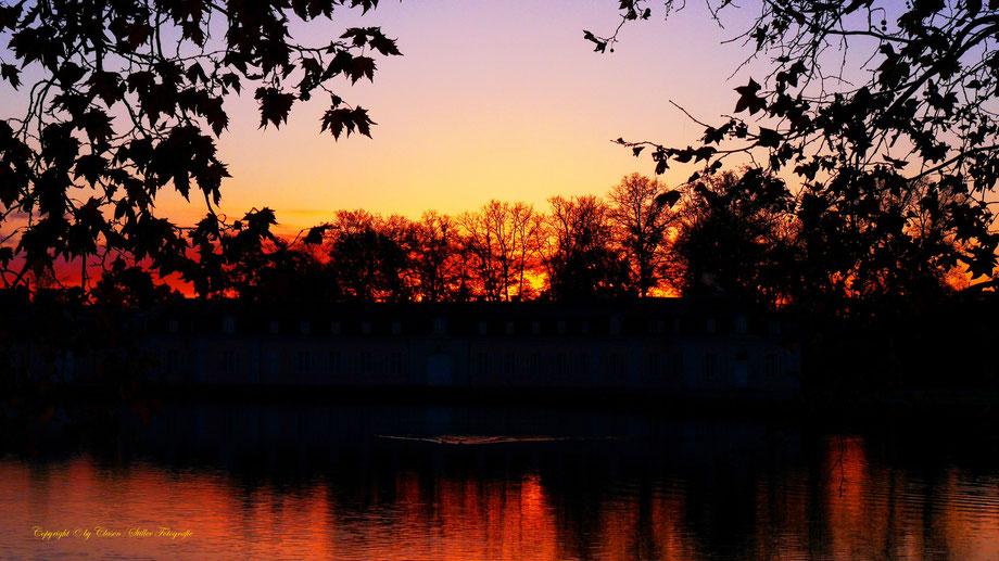 Sonnenaufgang, Kornfeld, Baum, Sonnenstrahlen, Wolken, Schloss Benrath,