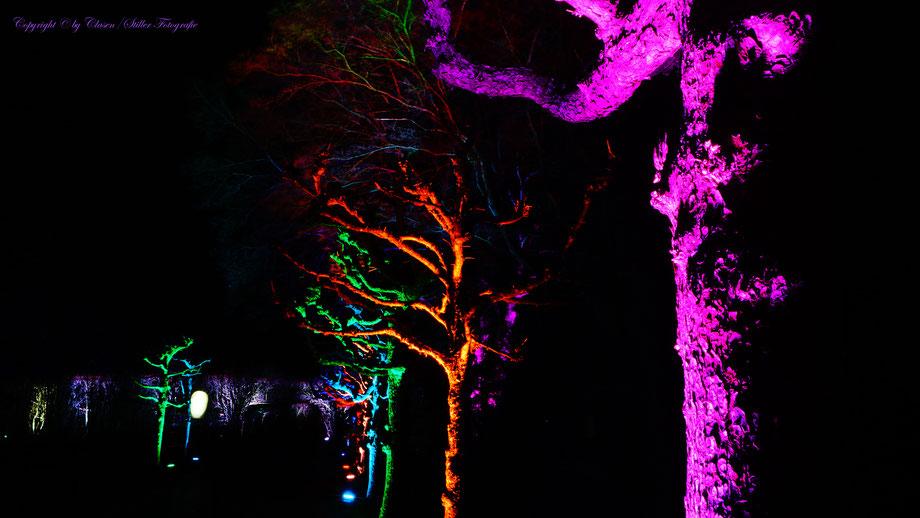 Clasen/Stiller Fotografie, Udo Clasen, Patrick Stiller, Nachtaufnahme, Abstrakte Fotos, Langzeitbelichtung, Grugapark Essen, Abstrakte Fotografie, abstrakte lichter, HDR, Düsseldorf, Duisburg, abstraktes, Kunst, Fotokunst, farbenspiel, Abstraktes,