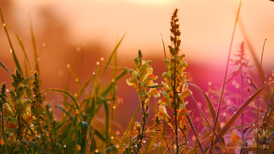 Pflanzen unter besonderen Lichteinfall von der Sonne, Vögel, Clasen/Stiller Fotografie, Udo Clasen, Patrick Stiller, Nachtaufnahme, Langzeitbelichtung, Sonnenaufgang, Sonnenuntergang, rot, grün, blau, orange, gold, gelb, Pflanzen, Baum, Bäume, HDR, Düssel