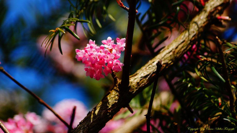 Frühling, blumen, Pflanzen,