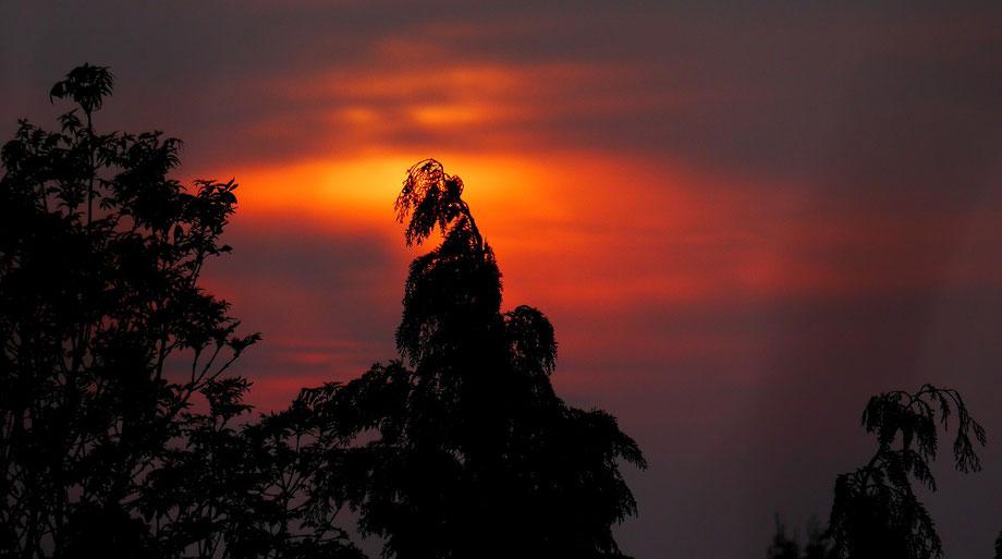 Landschaften, Wald, Wiesen, Felder, Gräser, Sonnenaufgang, Sonnenuntergang, Vögel, Wolken, Tiere, Pflanzen, Bäume,