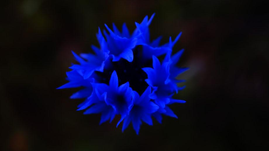 Die Farbe Blau, Clasen/Stiller Fotografie, Udo Clasen, Patrick Stiller, blau, Nachtaufnahme, Langzeitbelichting, Nachts, Mond, Sterne,  Kornblume,