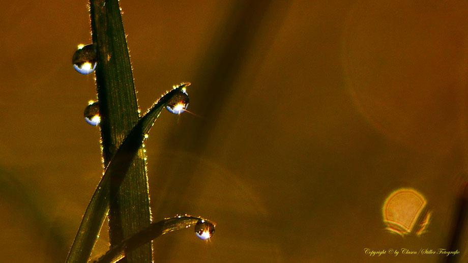 Morgentau, Wassertropfen