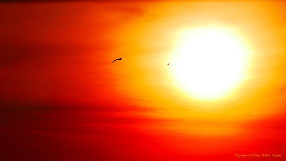 Vögel, Clasen/Stiller Fotografie, Udo Clasen, Patrick Stiller, Nachtaufnahme, Langzeitbelichtung, Sonnenaufgang, Sonnenuntergang, rot, grün, blau, orange, gold, gelb, Pflanzen, Baum, Bäume, HDR, Düsseldorf, Duisburg, Natur, Tiere, Wolken,