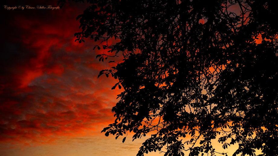 Düsseldorfer Fernsehturm, Vögel, Clasen/Stiller Fotografie, Udo Clasen, Patrick Stiller, Nachtaufnahme, Langzeitbelichtung, Sonnenaufgang, Sonnenuntergang, rot, grün, blau, orange, gold, gelb, Pflanzen, Baum, Bäume, HDR, Düsseldorf, Duisburg, Natur, Tiere