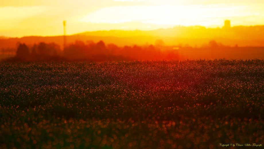 Sonnenaufgang, Kornfeld, Baum, Sonnenstrahlen, Wolken, Morgentau, Wassertropfen,