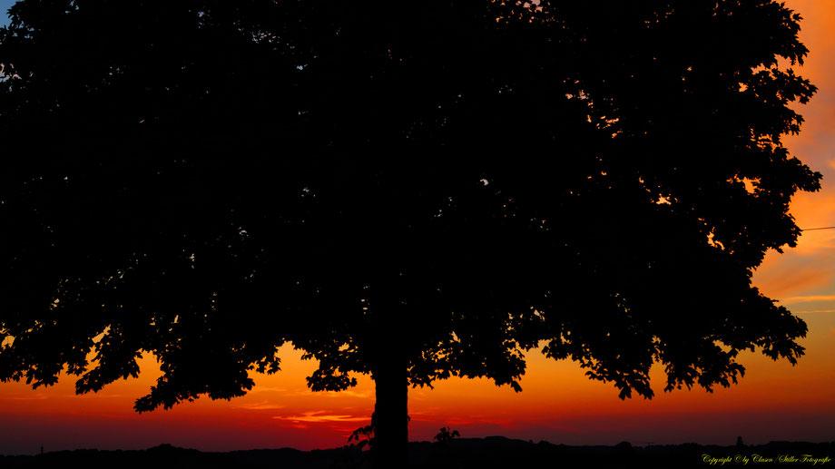 Sonnenaufgang, Kornfeld, Baum, Sonnenstrahlen, Wolken,