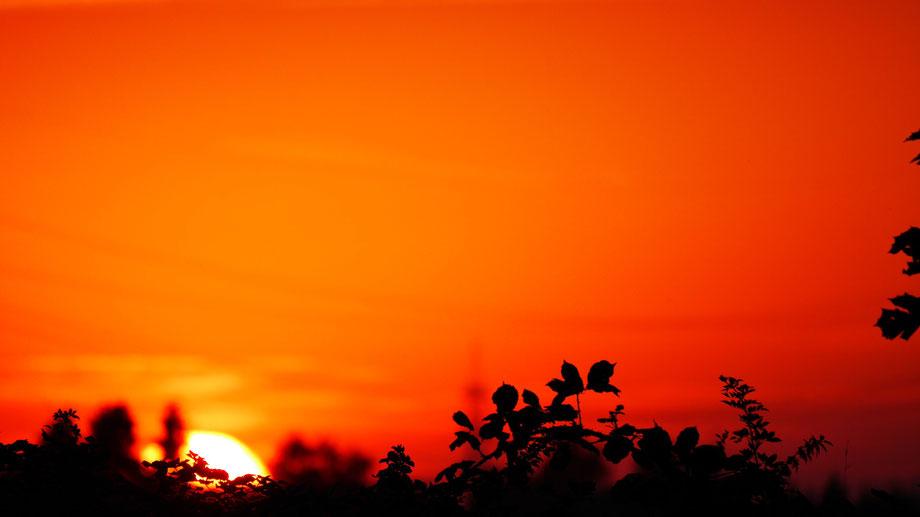 Clasen/Stiller Fotografie, Udo Clasen, Patrick Stiller, Nachtaufnahme, Langzeitbelichtung, Sonnenaufgang, Sonnenuntergang, rot, grün, blau, orange, gold, gelb, Pflanzen, Baum, Bäume, HDR, Düsseldorf, Duisburg, Natur, Tiere, Wolken, Wassertropfen, Vögel,