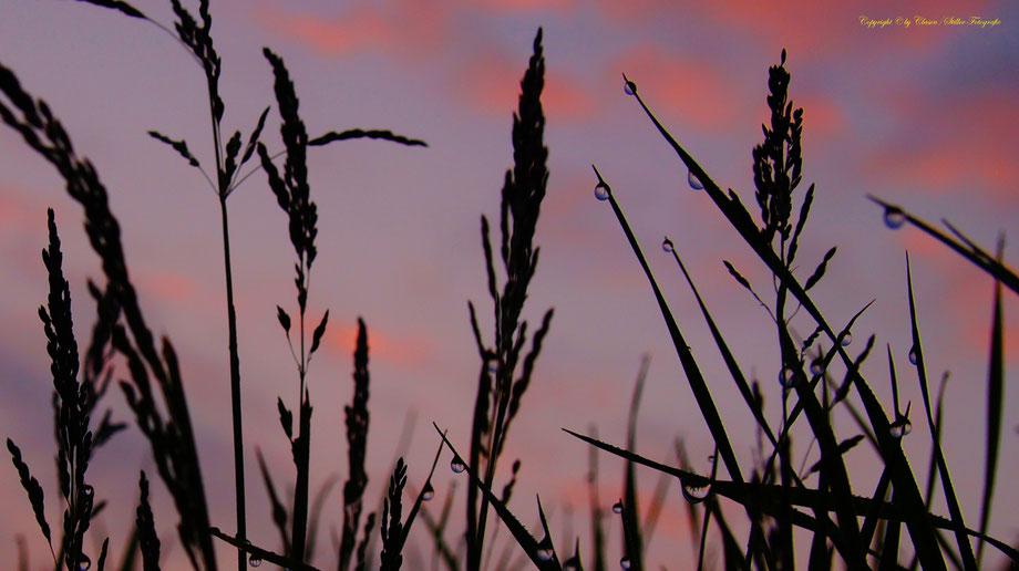 Sonnenaufgang, Kornfeld, Baum, Sonnenstrahlen, Wolken, Wassertropfen,