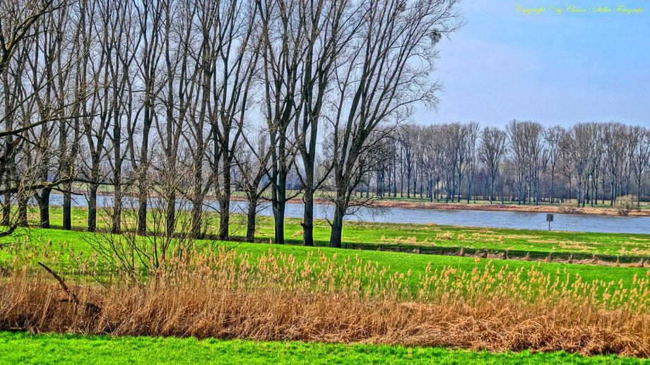 Rhein, Frühling,