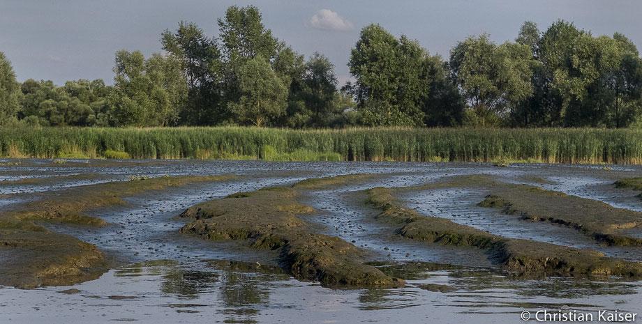 Tiefe Rillen im Schlick, kurz nach Ebbe. Jetzt kommt das Wasser mit der Flut  schnell zurück in dieses entlegene Wattgebiet.