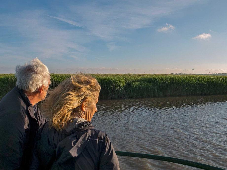 Blick auf den Schilfgürtel an der Elbe.