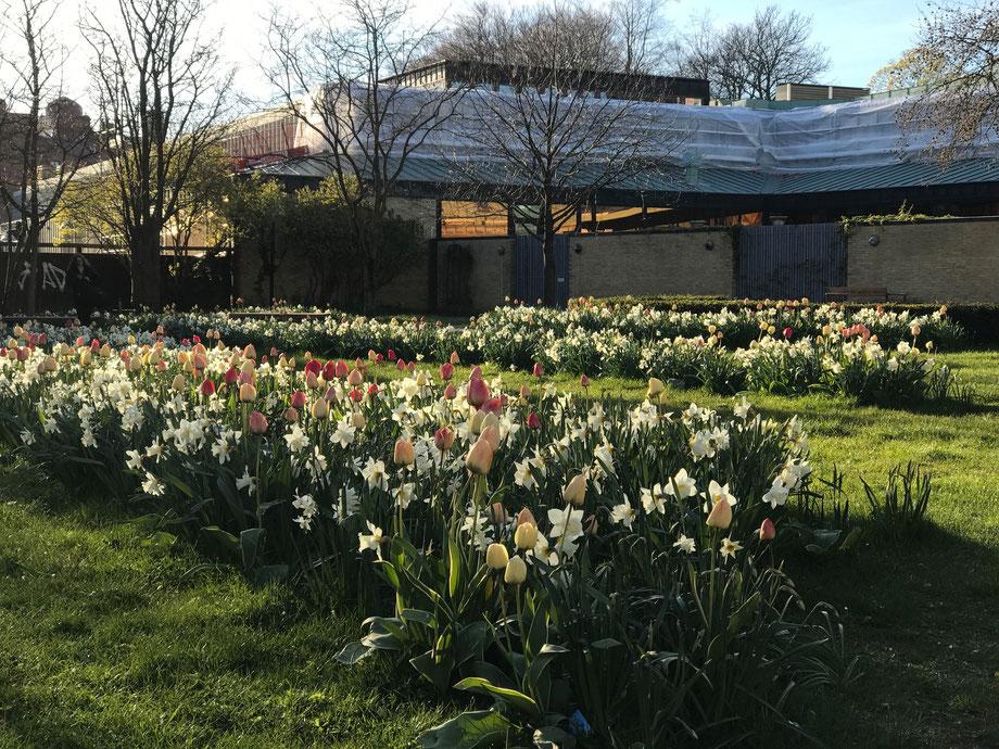 Spring in Lund