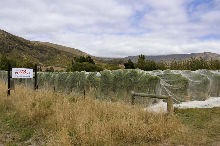 Two Paddocks - First Paddock Vineyard, Gibbston Valley