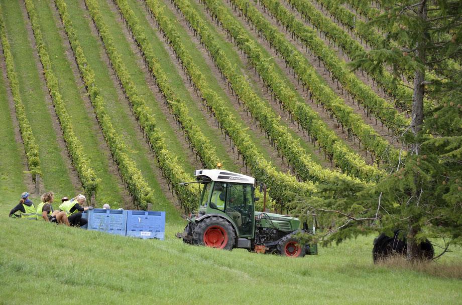 Auntsfield Harvest, Marlborough