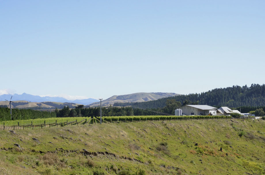 Te Kairanga Vineyard & Winery