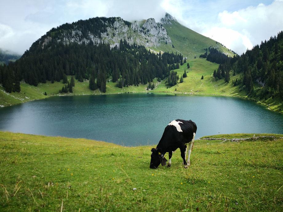 aussichtsberg shweizer alpen