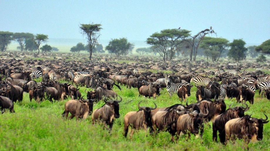 Tanzania_safaris_tours