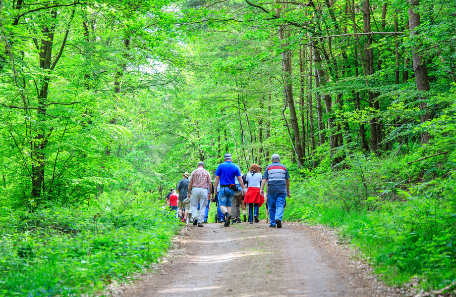 Gruppe Wanderer - Bild (c) emil-pfalzauge.de