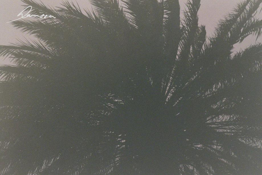 Jordanien, Palme, Filmfotographie