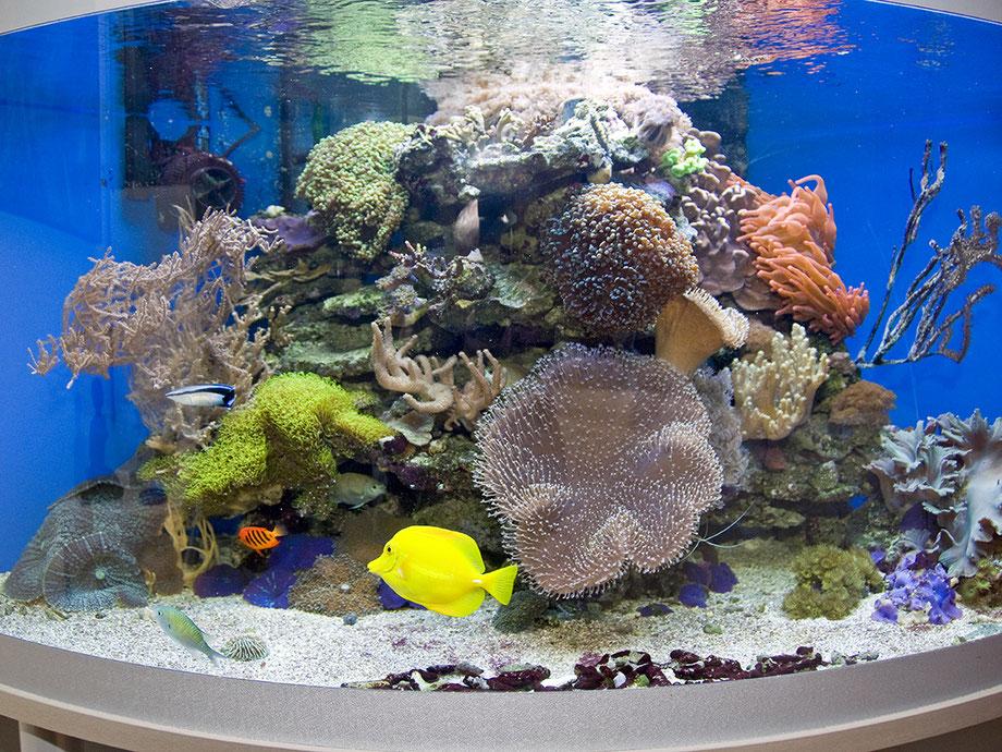 Meerwasser-Eckaquarium. Foto: Othmar Pötsch