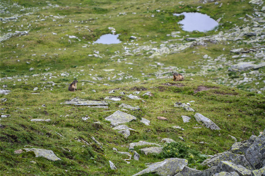 Two small groundhogs sitting near where we took a break from hiking in the mountains.