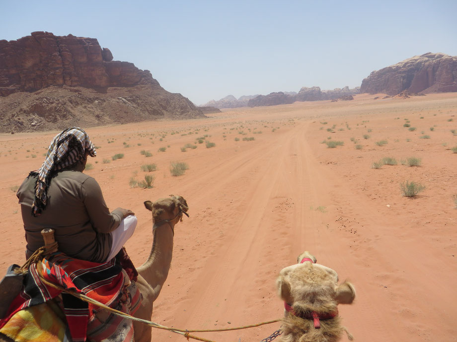 A camel ride to the camp