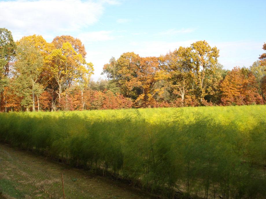 Genieten van de kleurenpracht in Het Leudal tijdens de Herfst