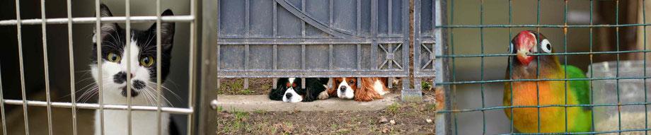 Tierheim, Tiere zu Weihnachten, Tiere verscghenken