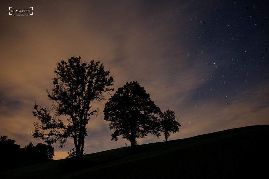 Bäume auf dem Raten in der Nacht