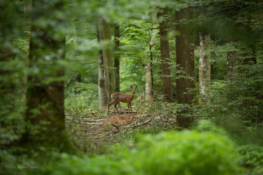 Unsere Waldbewohner