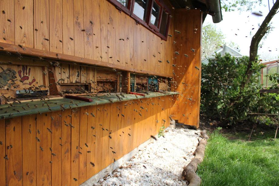 Bienenhaus, Bienen, Imkerei, Honig, Imkerei Rieger, Otting, Rudelstetten, Bienenflug, Honig kaufen, Bienenkönigin kaufen