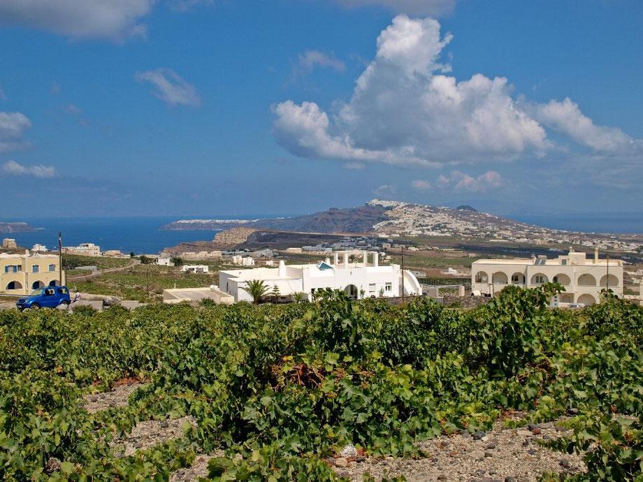Santorini wineyards III